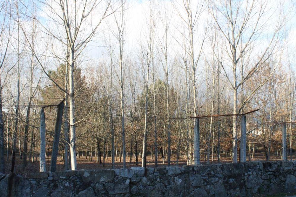 Soutelo Vila Verde Grundstück Bild 9625