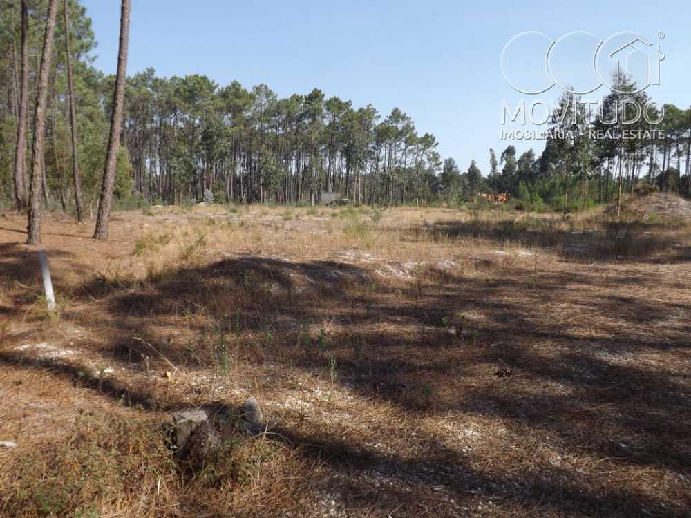 Carvide Leiria terrain picture 49259