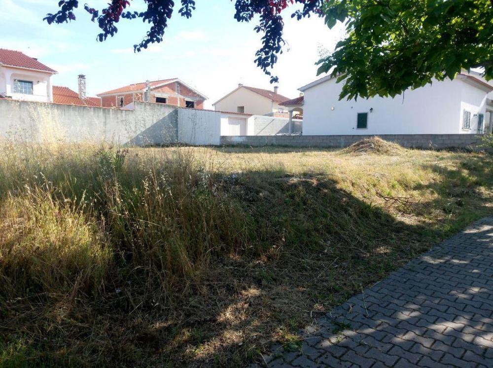 for sale terrain Lardosa Castelo Branco 1