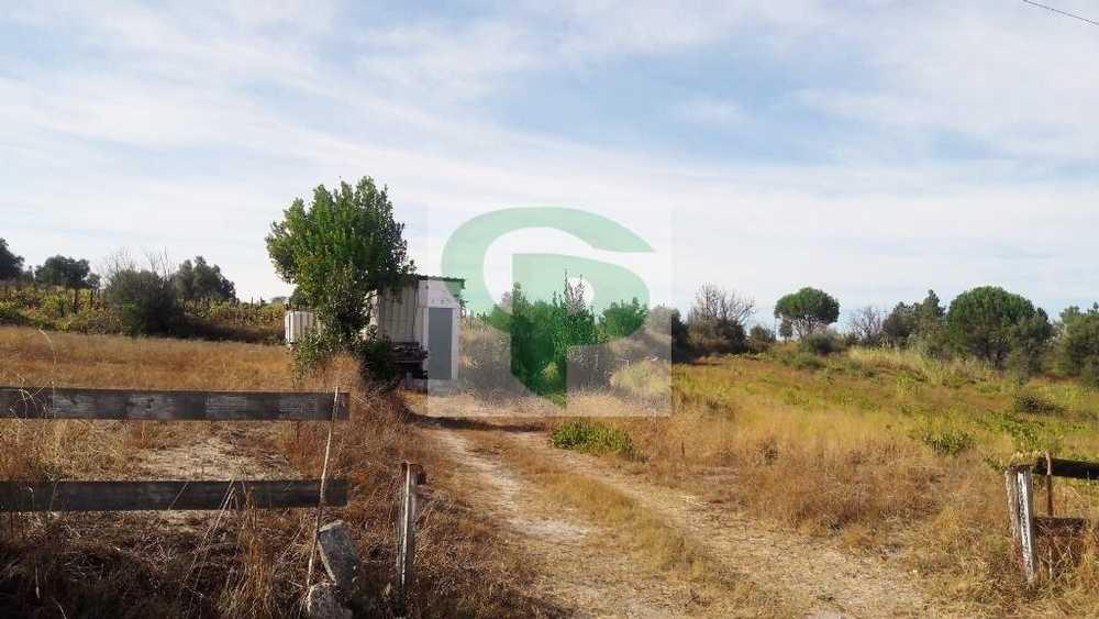Cartaxo Cartaxo terrain picture 49656