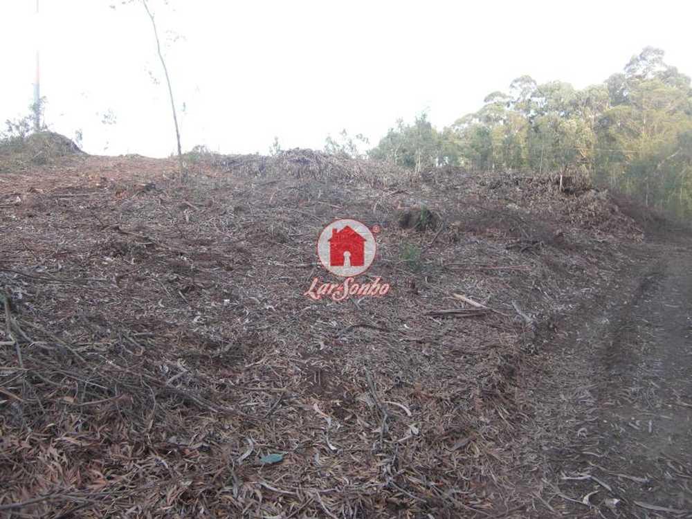 Fornelo Vila Do Conde terrain picture 54077