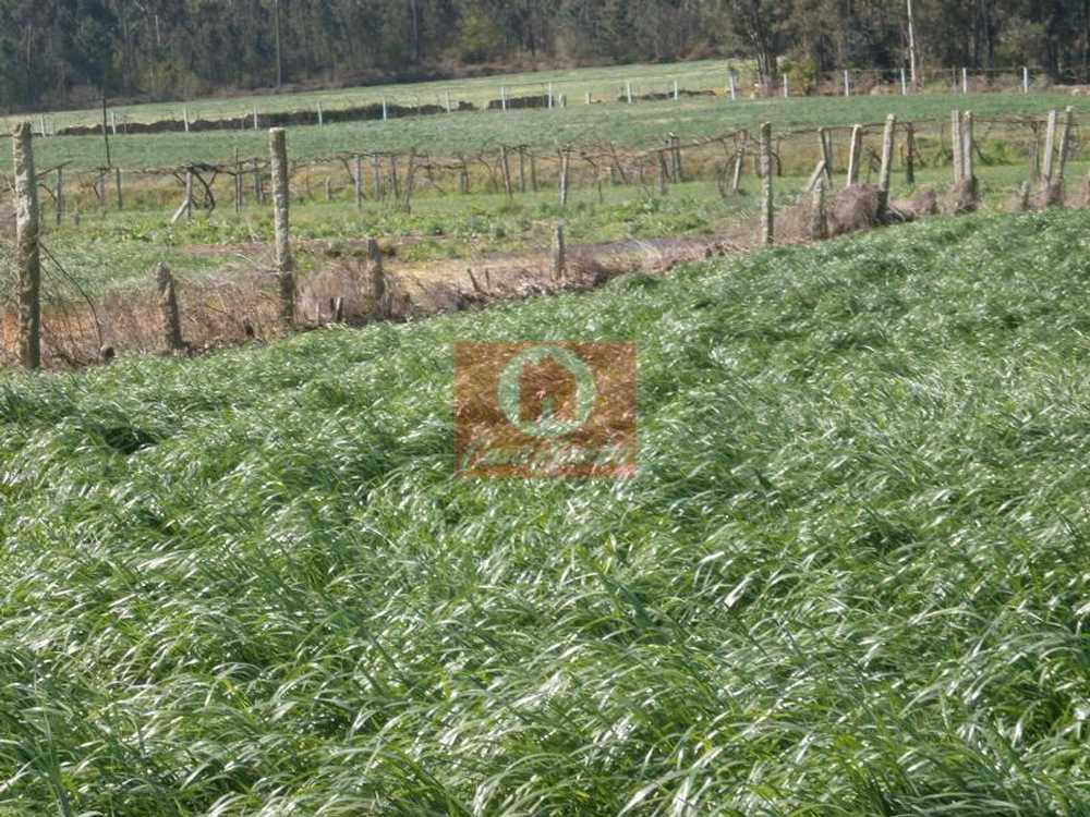 Rates Póvoa De Varzim terrain picture 54020