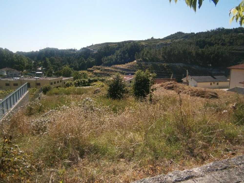 Gondar Amarante terrain picture 48702