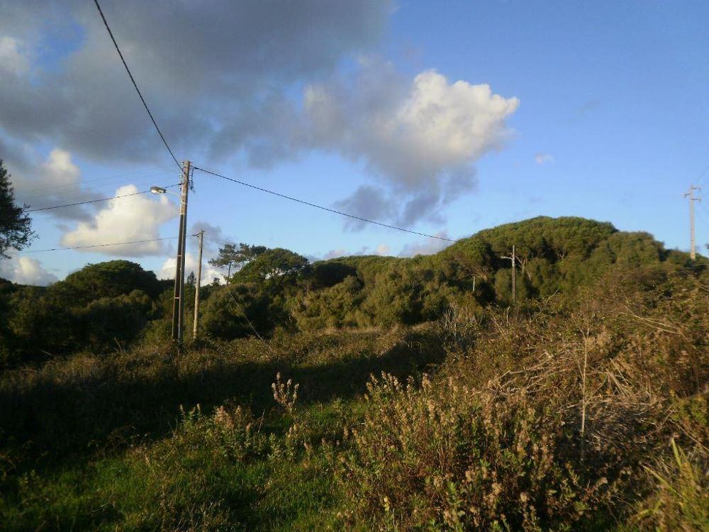 Morelena Sintra terrain picture 7779