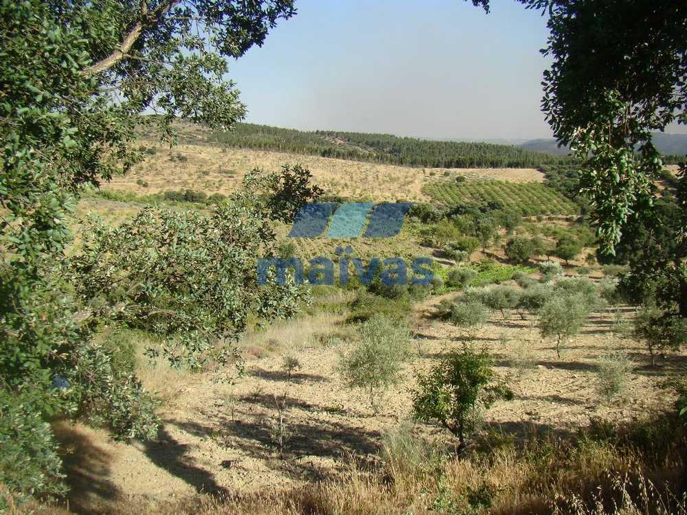 Pereiros São João Da Pesqueira terrain picture 51617