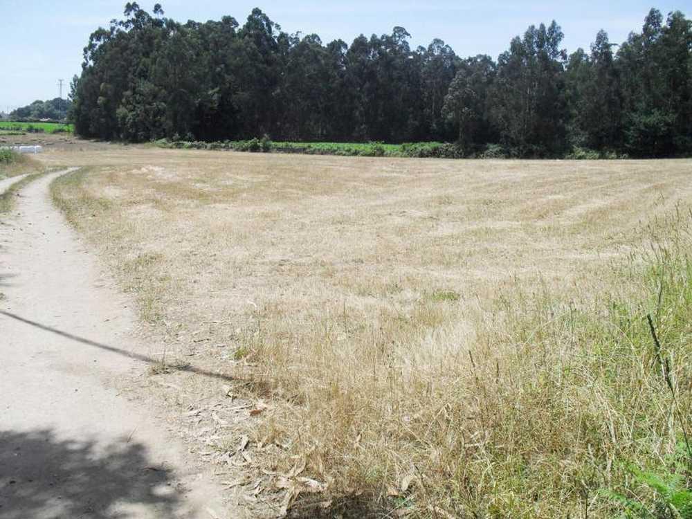 Fornelo Vila Do Conde terrain picture 53388