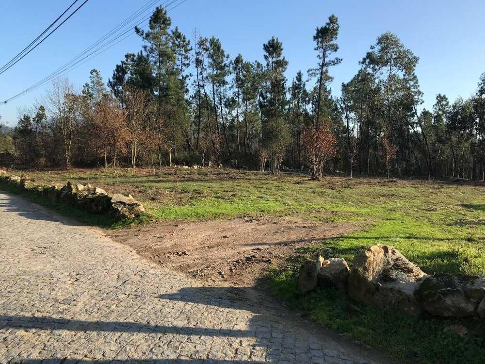 Encourados Barcelos terrain picture 48829