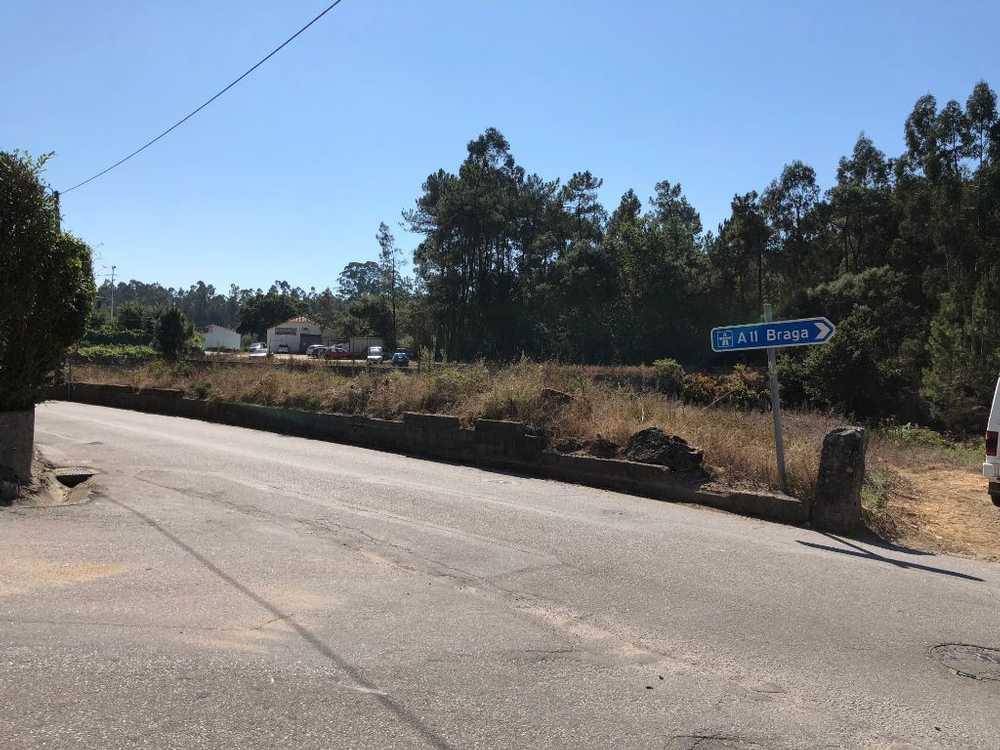 Cristelo Barcelos terrain picture 48872