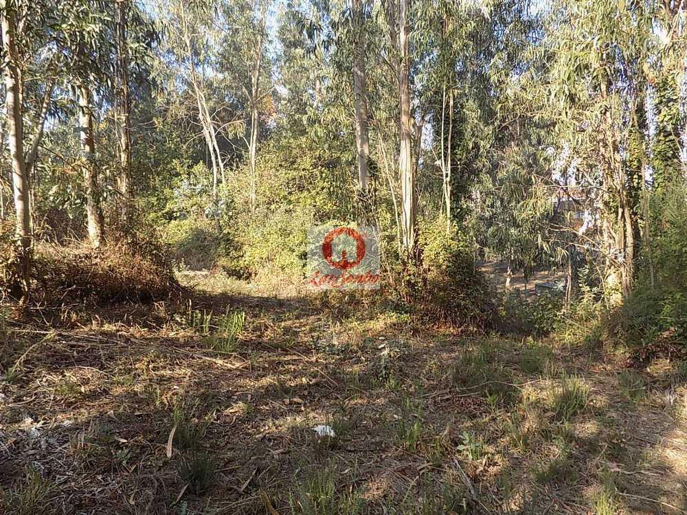 Nine Vila Nova De Famalicão terrain picture 54955
