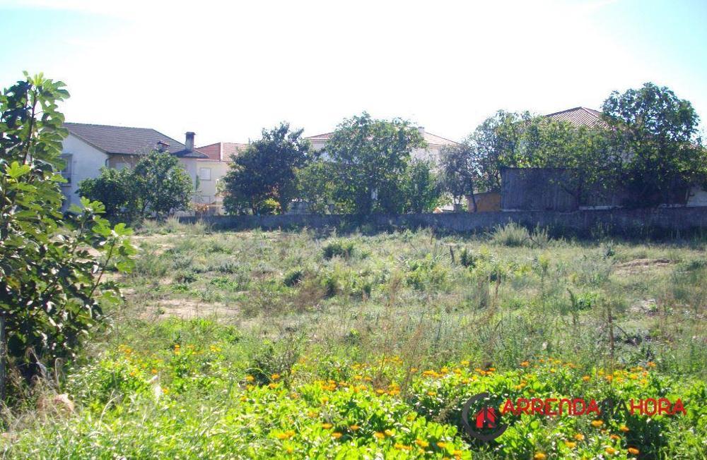 Várzea Viseu terrain picture 12450