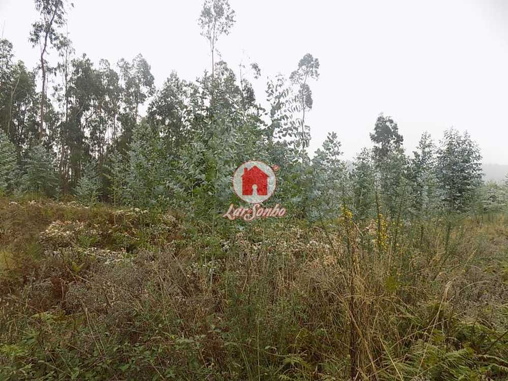 Cruz Vila Nova De Famalicão terrain picture 54417