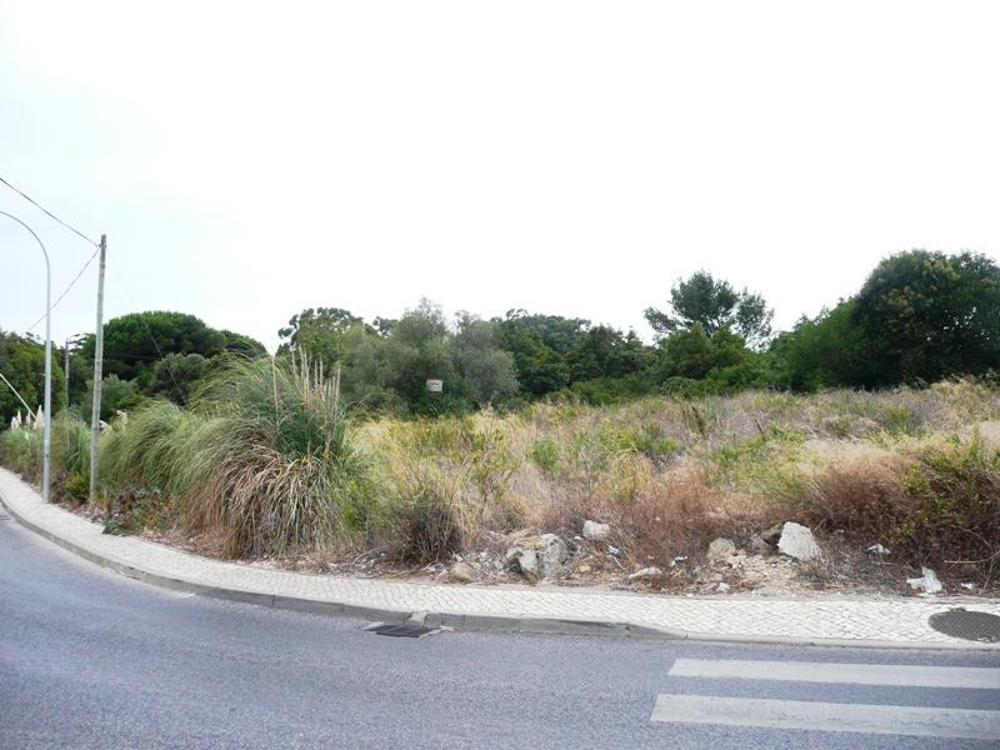 Algueirão Sintra terrain picture 25758