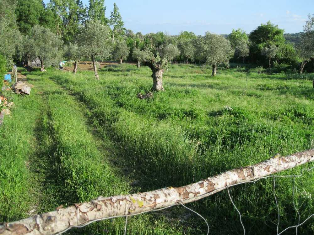 Paialvo Tomar terrain picture 49151