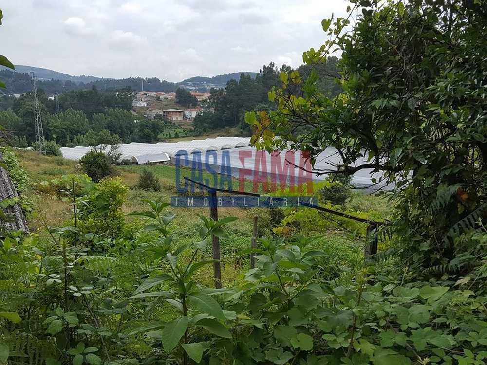 Vilarinho Santo Tirso terrain picture 83111