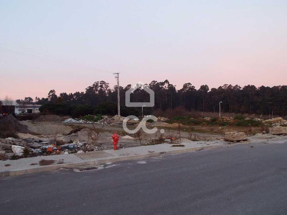 Negreiros Barcelos terrain picture 74816