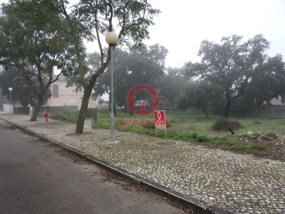 Azeitão Setúbal terrain picture 76448