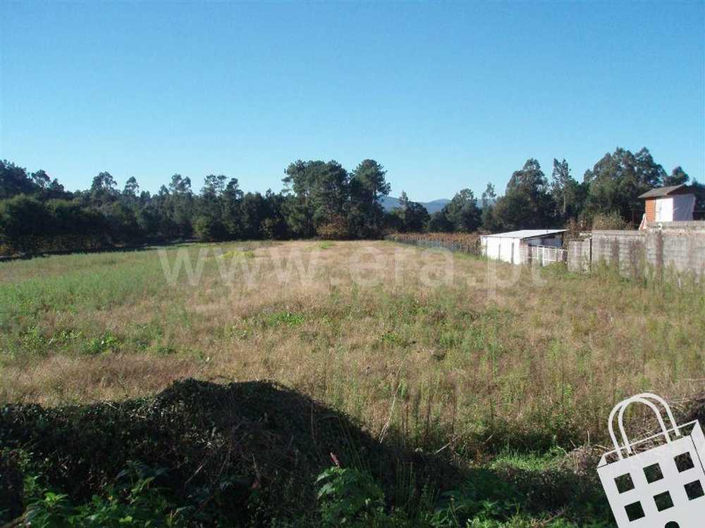 Cornes Vila Nova De Cerveira terrain picture 79574