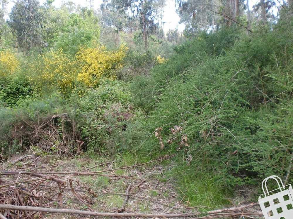 Meinedo Lousada terrain picture 77808