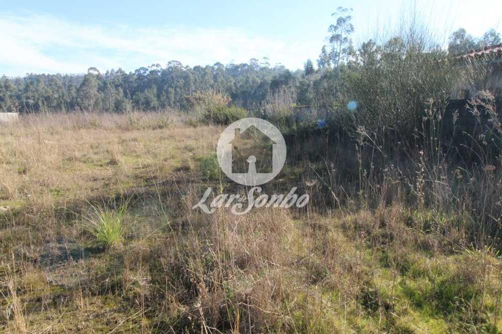 Junqueira Vila Do Conde terrain picture 56863