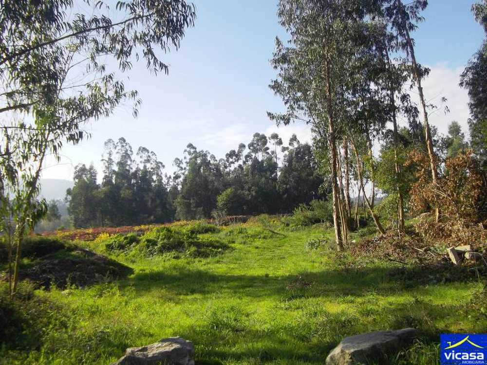 Barroselas Viana Do Castelo terrain picture 58339