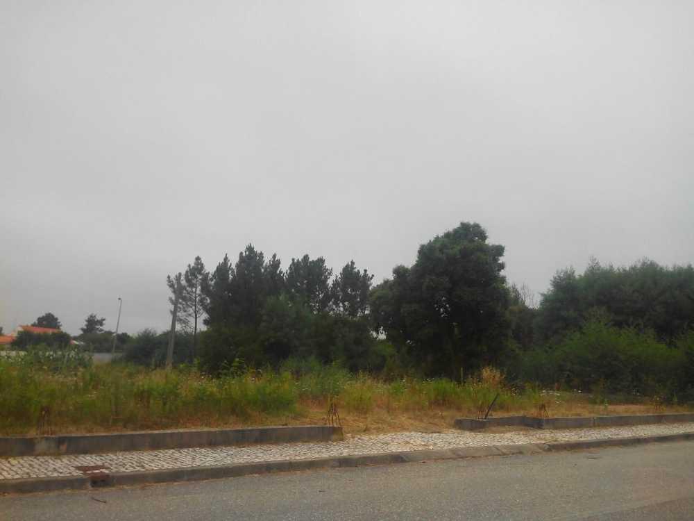 Coimbra Coimbra terrain picture 82299