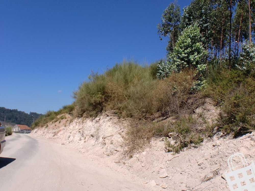 Sousela Lousada terrain picture 77810