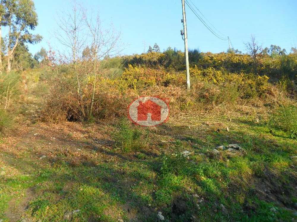 Santa Eulália Vizela terrain picture 57403