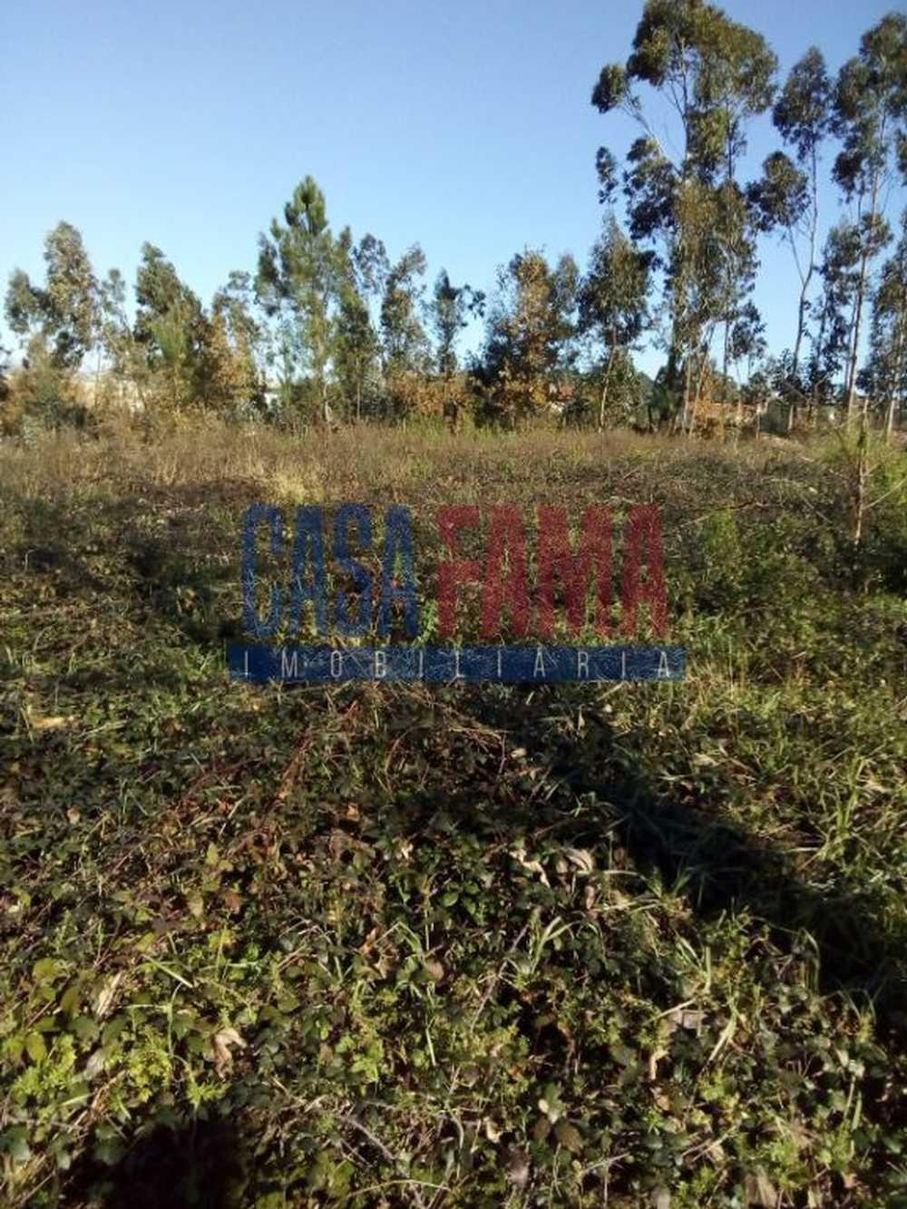 São Romão do Coronado Trofa terrain picture 82954