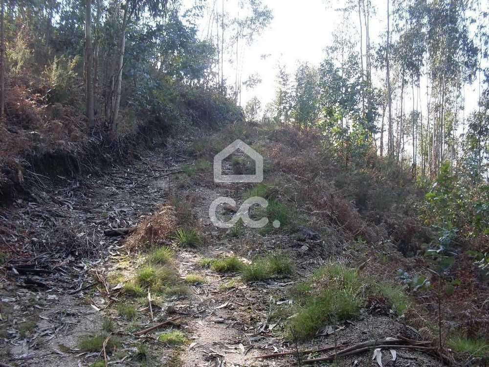 Guimarães Guimarães terrain picture 77436
