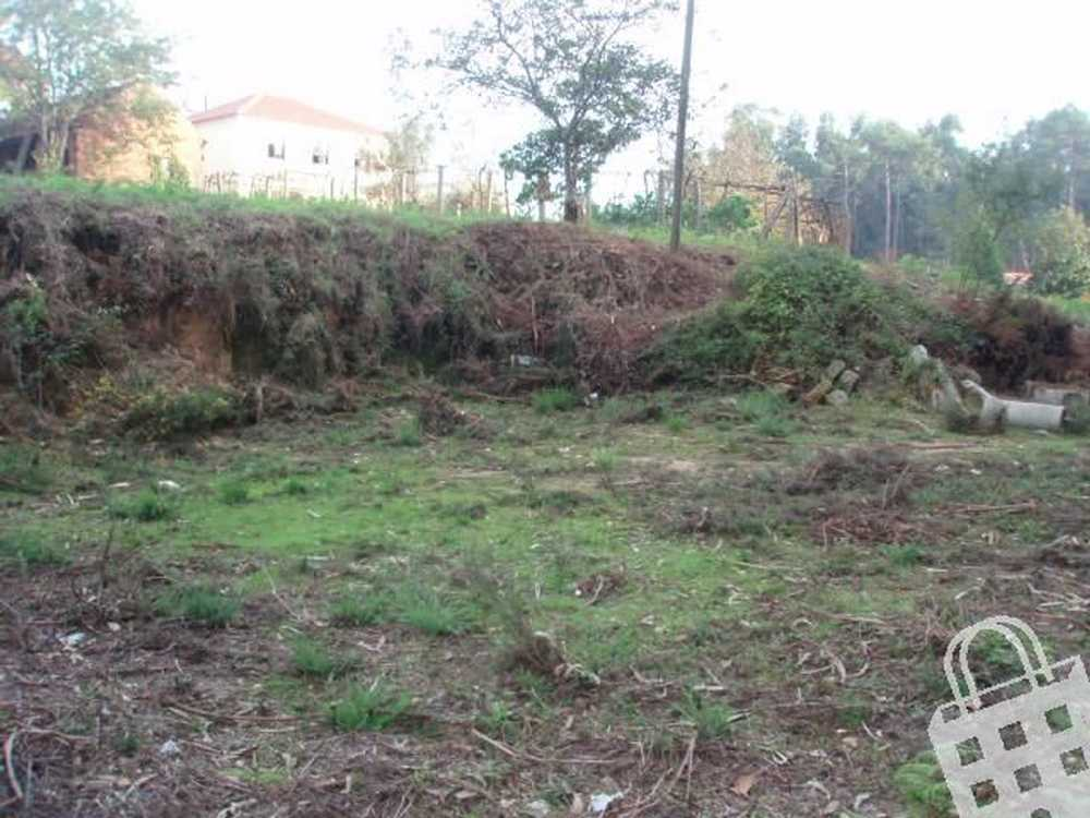 Campos Vila Nova De Cerveira terrain picture 79483