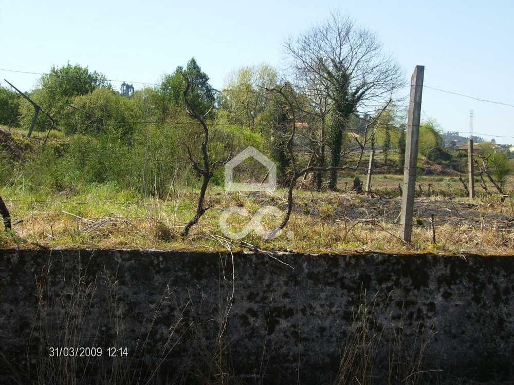 Meinedo Lousada terrain picture 77802