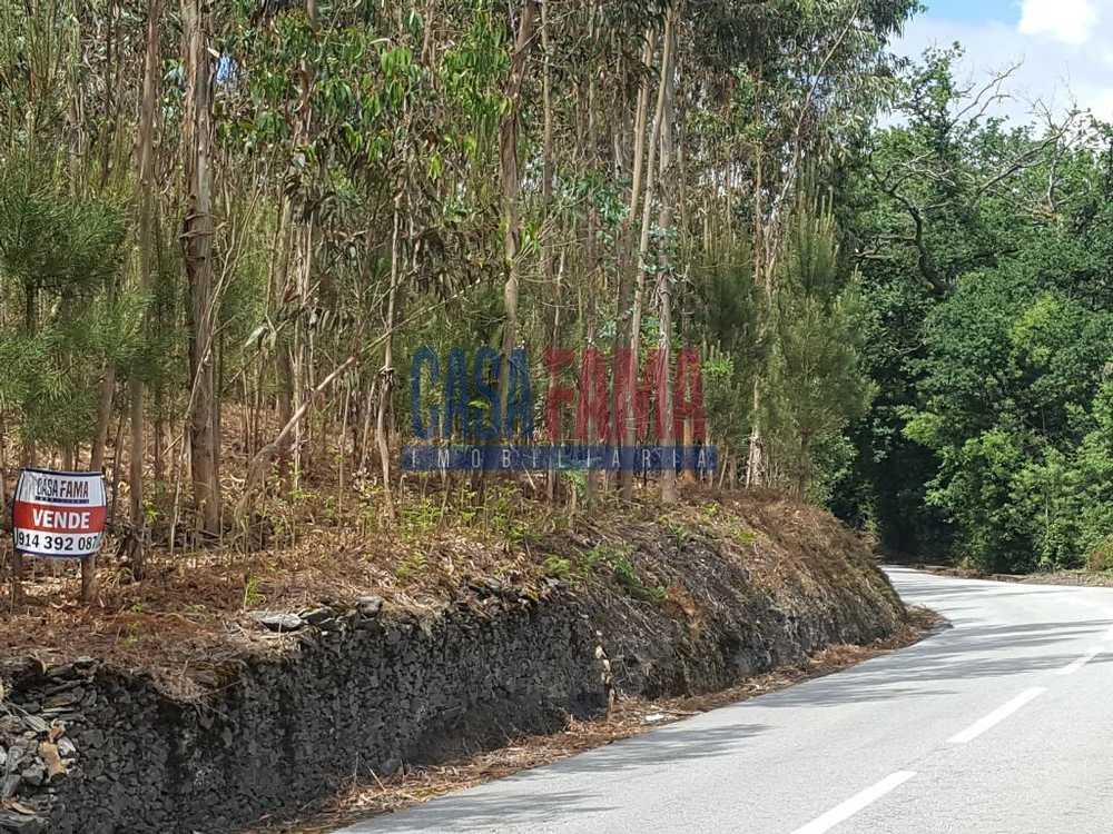 Vilarinho das Cambas Vila Nova De Famalicão terrain picture 82782