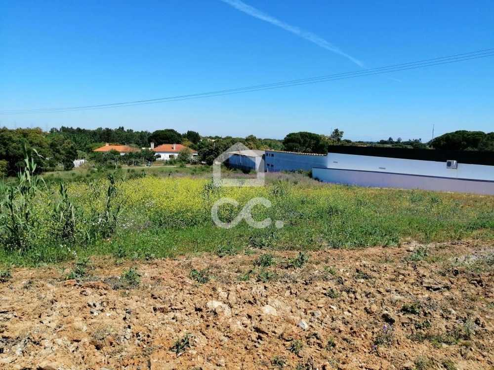 Setúbal Setúbal terrain picture 78610