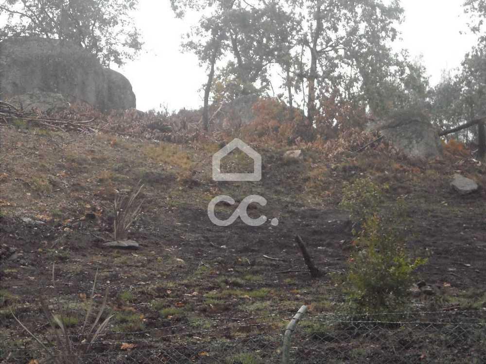 Gémeos Guimarães terrain picture 77463