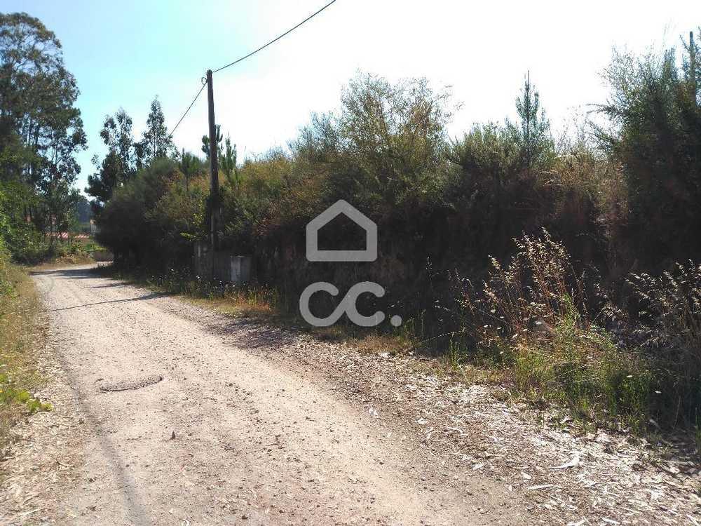 Nogueira Vila Nova De Cerveira terrain picture 79600