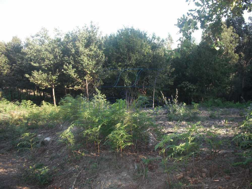 Arcozelo Vila Verde terrain picture 60100