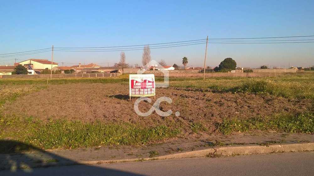 Carvide Leiria terrain picture 78258