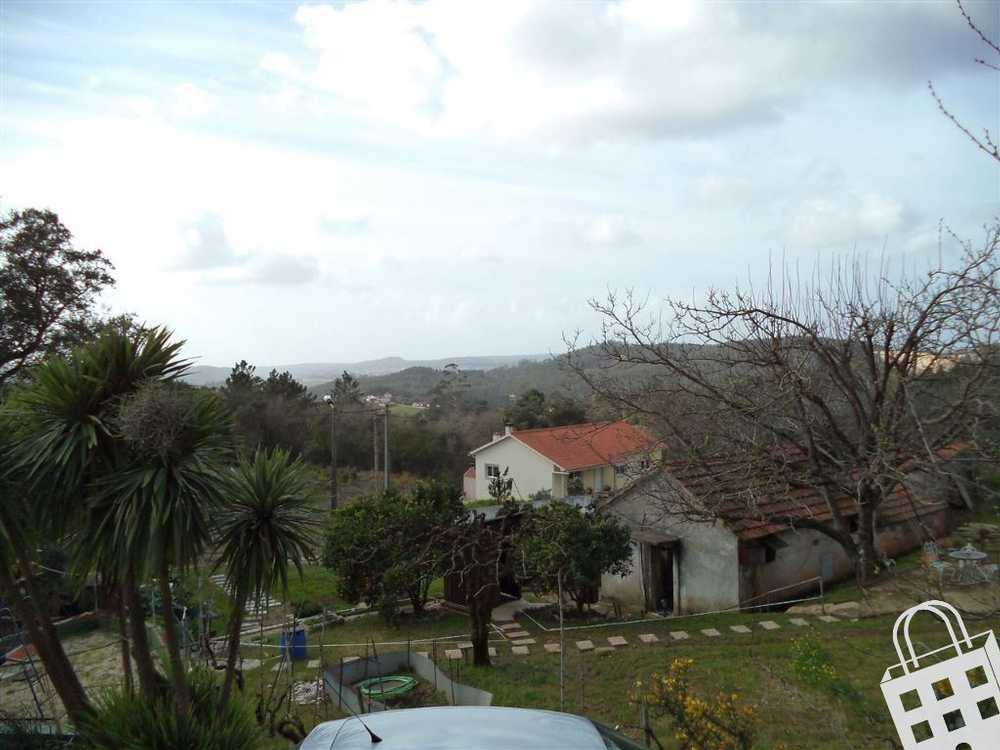 Aljubarrota Alcobaça terrain picture 71131