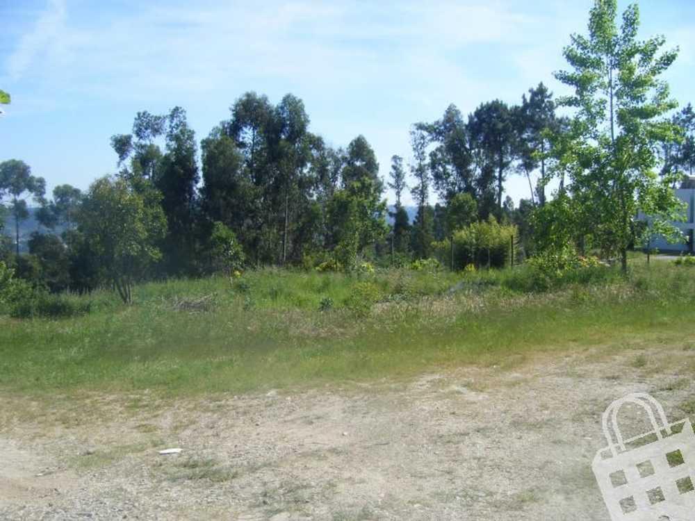 Gémeos Guimarães terrain picture 77278