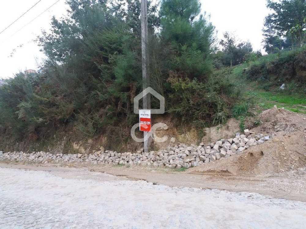 Meinedo Lousada terrain picture 77840