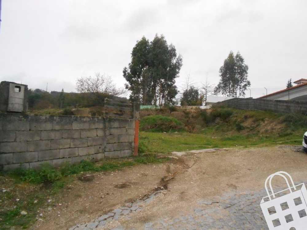 Santa Maria Oliveira Vila Nova De Famalicão terrain picture 77306