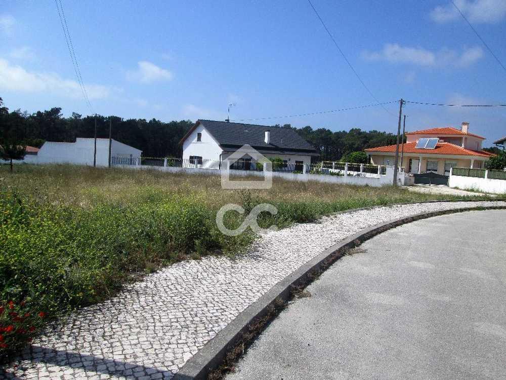 Vieira de Leiria Marinha Grande terrain picture 78264