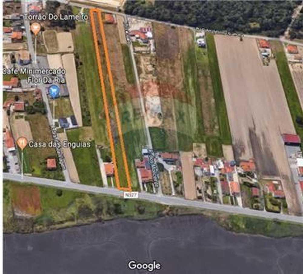 Aldeia dos Fernandes Almodôvar terrain picture 62576