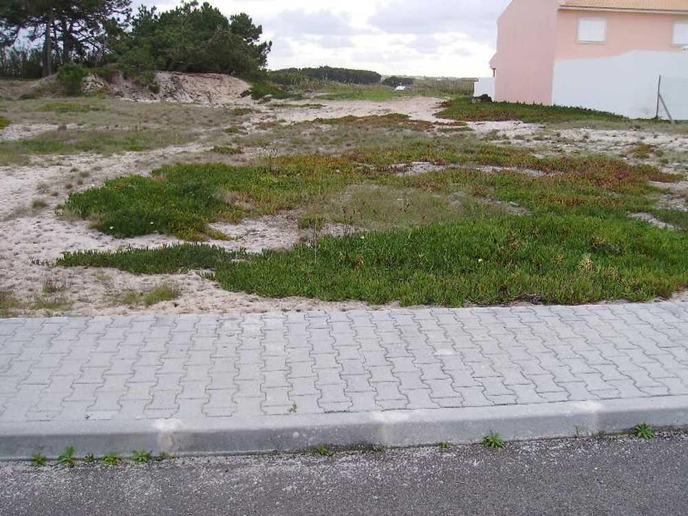 Ferrel Peniche terrain picture 78762