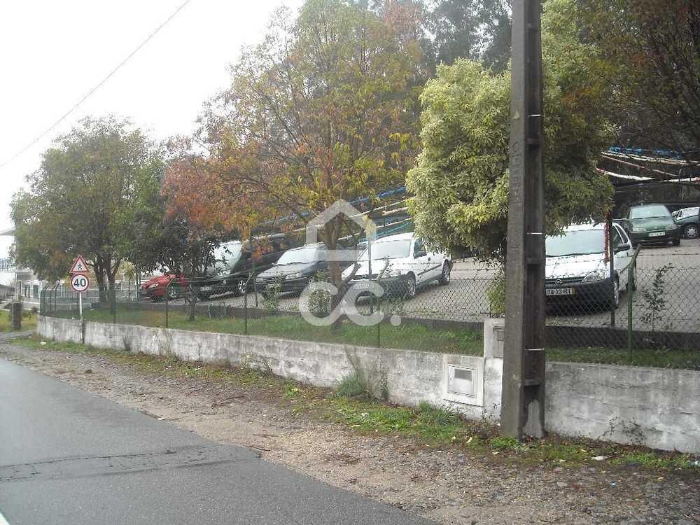 Gémeos Guimarães terrain picture 77536