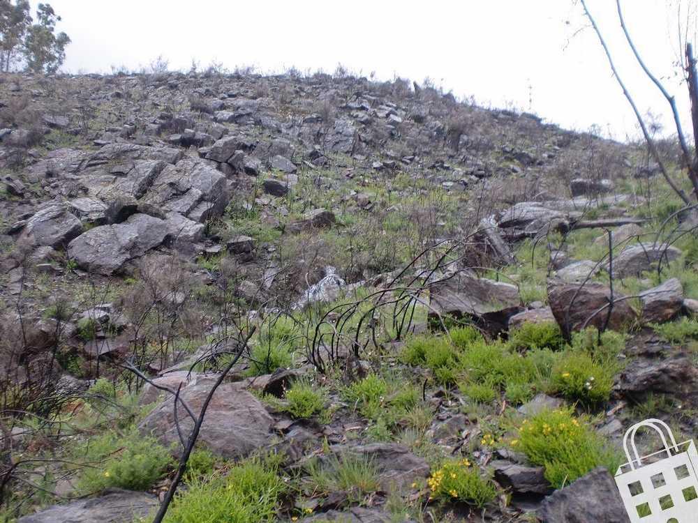Sousela Lousada terrain picture 77824