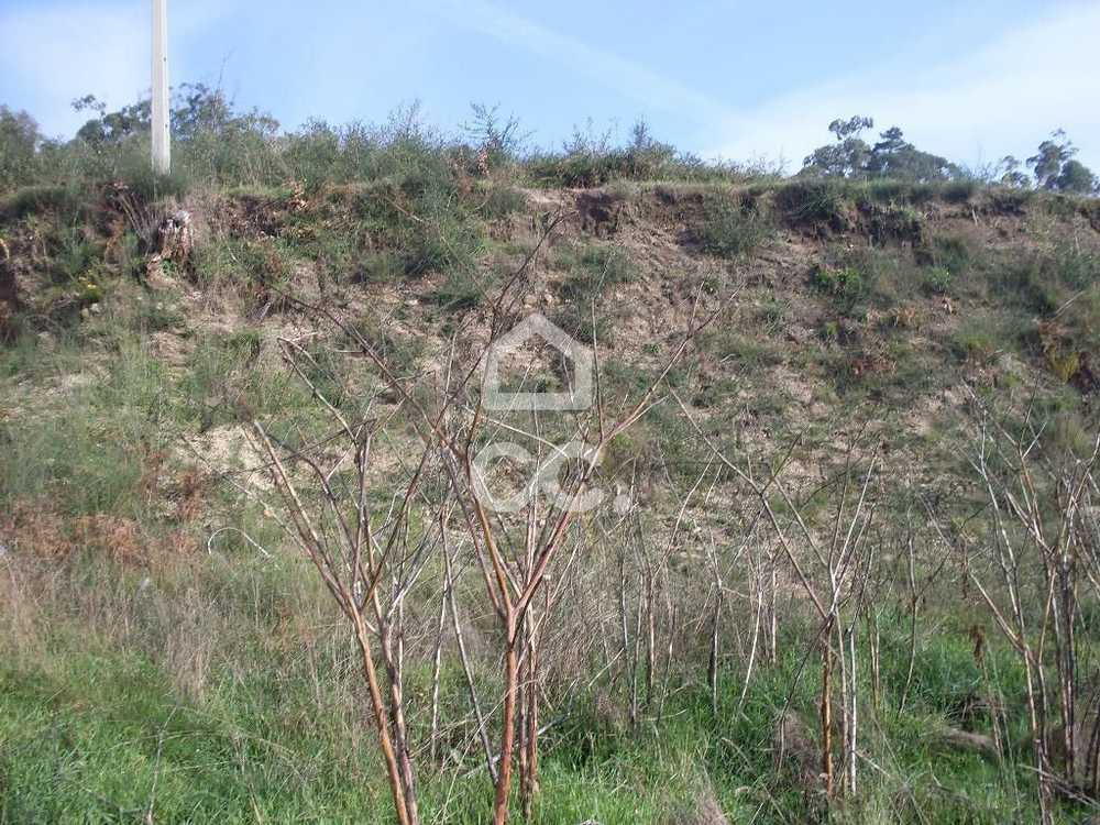 Lordelo Guimarães terrain picture 77465