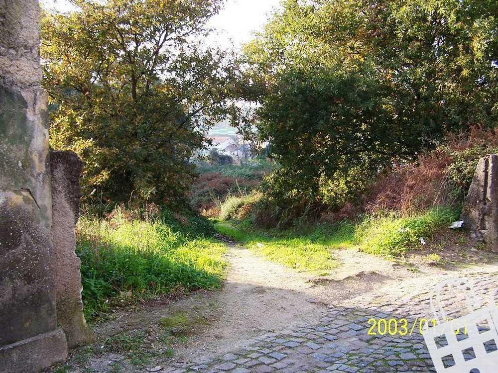 Maia Maia terrain picture 74414