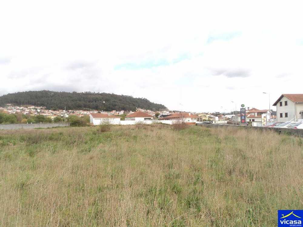 Castelo do Neiva Viana Do Castelo terrain picture 58360