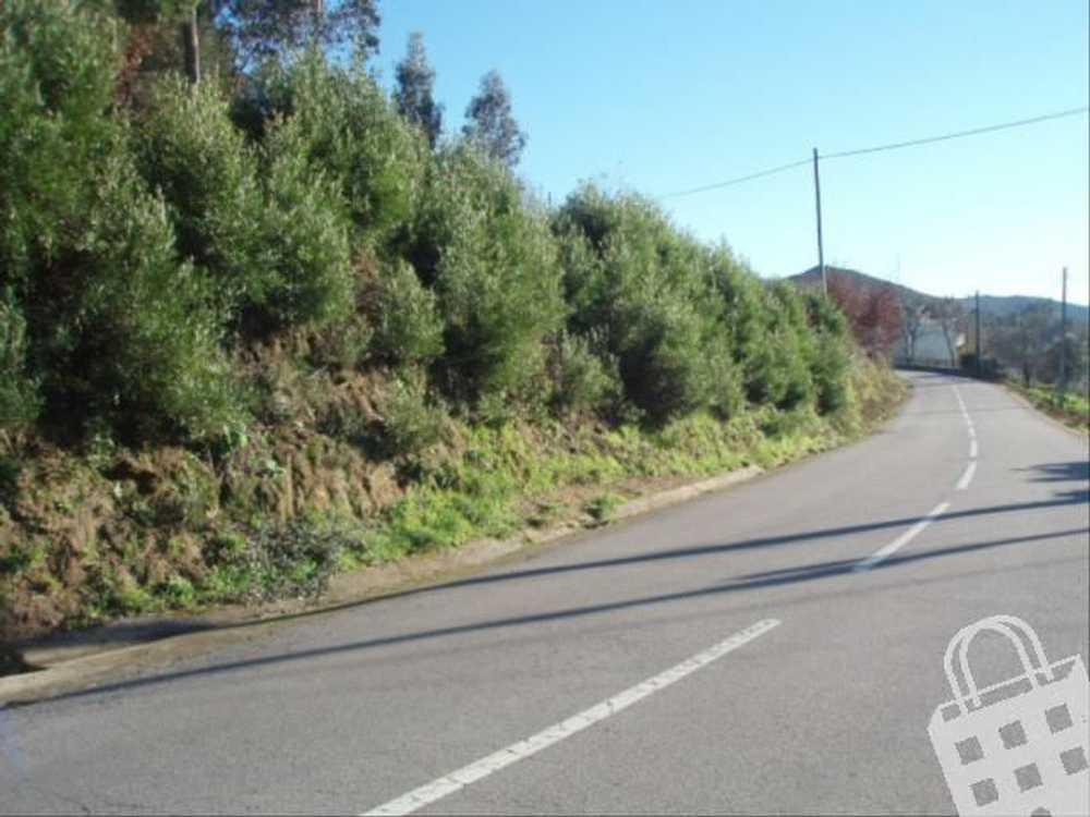Cornes Vila Nova De Cerveira terrain picture 79497